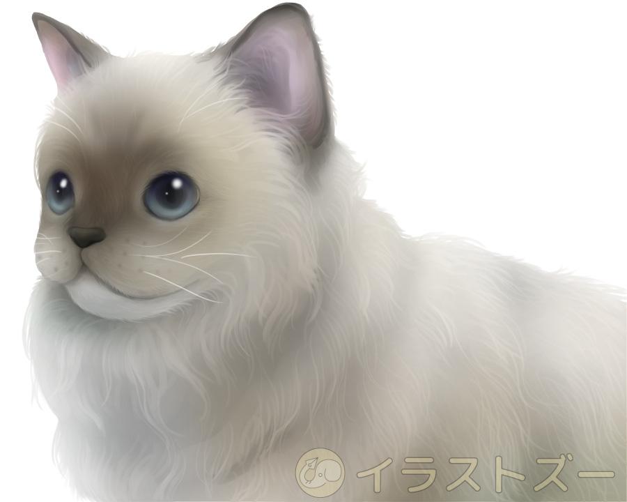 猫のリアルな動物イラスト